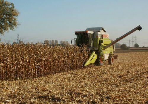 corn-837815