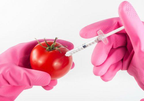pomidor_GMO