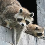 Lista obcych gatunków inwazyjnych