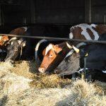 Szkolenie z zakresu dobrostanu zwierząt oraz przeprowadzenia uboju