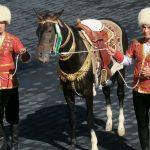 """Konie achałtekińskie """"skrzydła Turkmenów"""""""