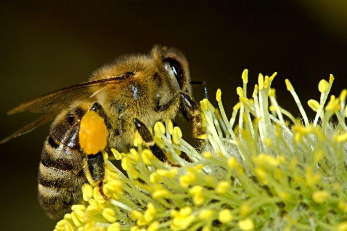 dc90b15228c6ce W związku z rozpoczęciem wykonywania zabiegów ochrony roślin Państwowa  Inspekcja Ochrony Roślin i Nasiennictwa podaje wytyczne dotyczące środków  ostrożności ...