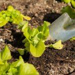 Wykaz producentów ekologicznych