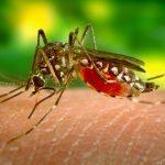 Informacja dotycząca zakażeń wirusem Zika