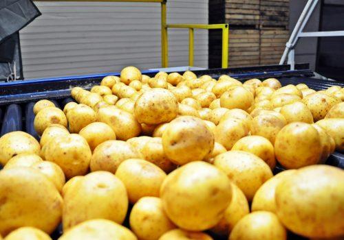 ziemniaki1