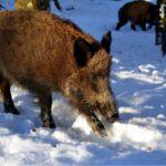 Projekt ustawy <br> o zmianie ustawy <br> m.in. o ochronie zdrowia zwierząt