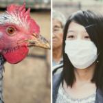 Niepokojące <br> wieści w sprawie <br> grypy ptaków