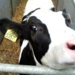 Pomoc dla mleczarzy