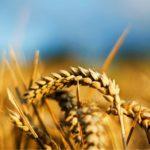 Sytuacja <br> na rynku zbóż
