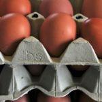 Holenderskie <br> jaja skażone