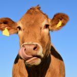 Rekompensaty <br> dla mleczarzy