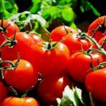 Pomidory chronią <br> przed rakiem skóry