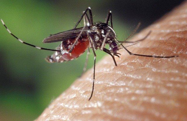 mosquito-1332382_640