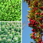 Te rośliny przedłużą życie oraz poprawią zdrowie i urodę