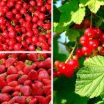 Owoce i warzywa <br> o intensywnych barwach są zdrowsze