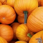 Dynia – nie tylko <br> na Halloween