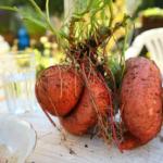 Batat – ziemniak <br> na słodko!