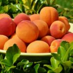 Zbiory warzyw <br> i owoców – szacunki