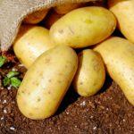 Komunikat – oznakowanie <br> ziemniaków innych <br> niż sadzeniaki