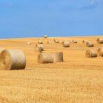 Lepsza koniunktura <br> w rolnictwie