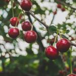 Nowe prawo <br> zdrowia roślin