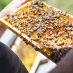 Nabór <br> dla pszczelarzy