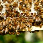 """Adoptuj pszczołę"""