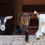 Spis i rejestracja zwierząt