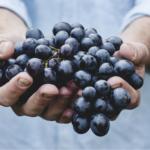 Pomoc przy zbiorach<br> owoców i warzyw