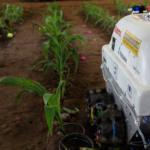 Robot rolniczy rozpoznaje chore rośliny i chwasty