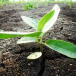 Zrównoważony<br> rozwój i rolnictwo