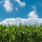 Zakaz stosowania<br> pasz GMO