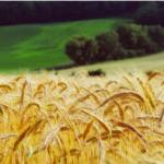 Potencjał<br> produkcji rolnej