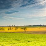 Rolnictwo ekologiczne kwitnie
