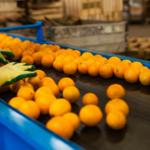 Wielu producentów żywności jest niewypłacalnych