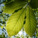 Ważne wyzwania<br> dla urzędowych<br> służb zdrowia roślin