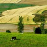 Dopłaty na kontach rolników