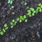 Integrowana<br> produkcja roślin