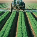 Wzrosła produkcja pestycydów