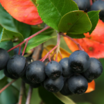 Bardzo zdrowe rośliny