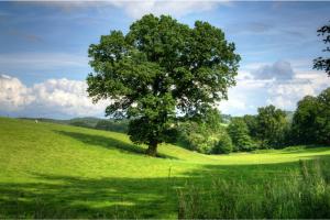pole drzewo rolnictwo