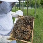 Wsparcie<br> dla pszczelarzy