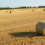 Prognoza<br> dla rolnictwa UE