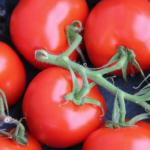 Pomidorowe wyzwanie