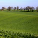 Zazielenienie – ułatwienia<br> dla rolników