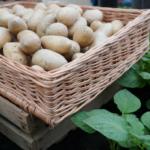 Rynek ziemniaków
