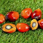 Czy olej palmowy<br> jest zdrowy?
