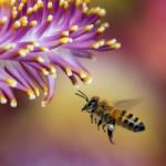 Pamiętajmy<br> o pszczołach!