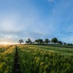 Plonowanie roślin<br> w UE