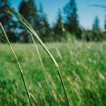 Wpływ nadmiaru dwutlenku węgla<br> na rośliny
